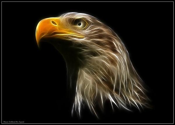 bald eagle by shaunstothardthelegend