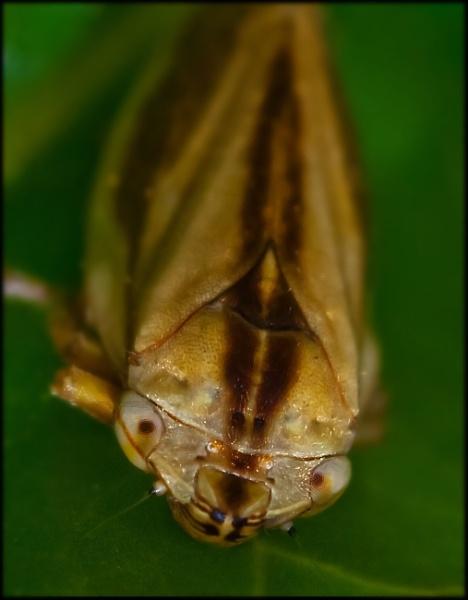 Bugs Life by kel55