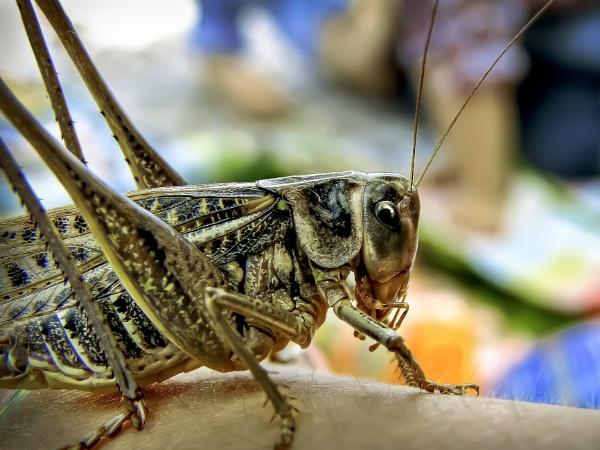 Grasshopper on the arm by ValeryAst