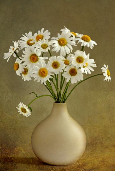 Marguerites by flowerpower59