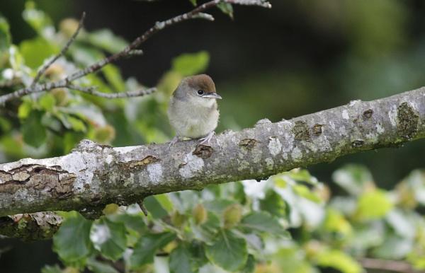 Baby Bird by karkley