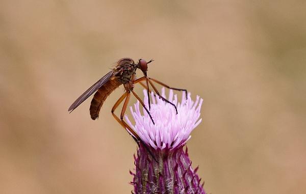 Dance Fly by DerekL