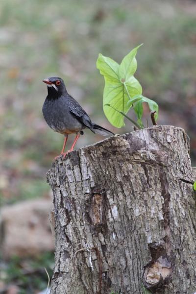 A Bird. Cuba by Nike55