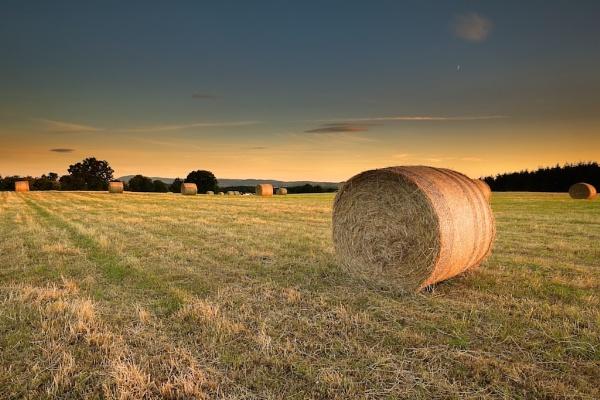 Shredded wheat by mikeyham