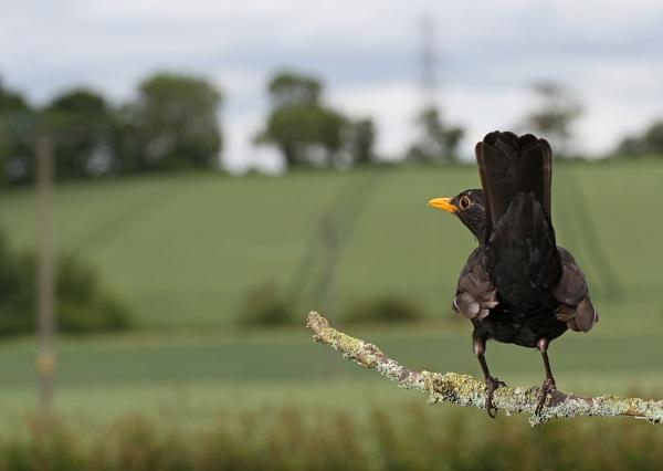 A Birds Eye View by lawbert