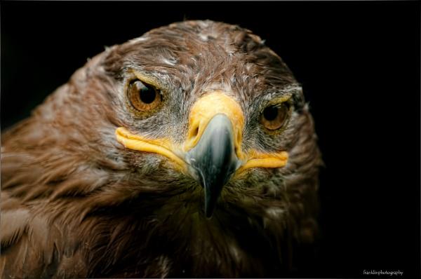 bird of prey by marcus1976