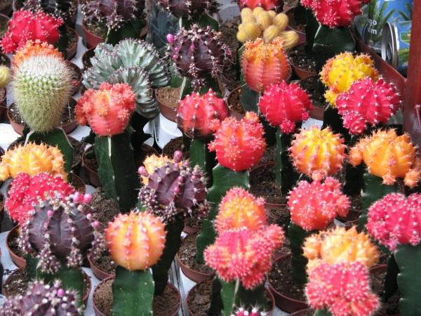 Prickly Colour by sammydarlo