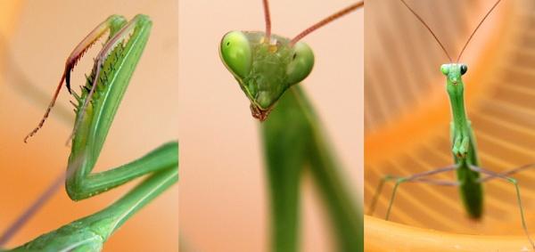 Green Bug by Dureja