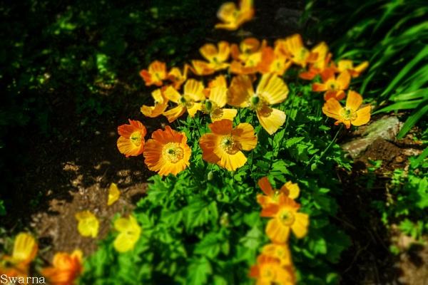Floral XIV by Swarnadip