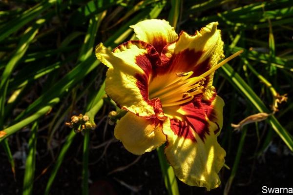 Floral XV by Swarnadip