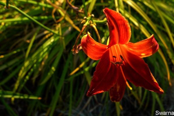 Floral XVI by Swarnadip