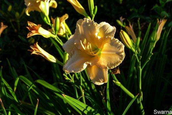 Floral XVII by Swarnadip