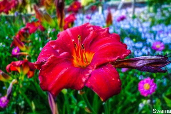 Floral XVIII by Swarnadip