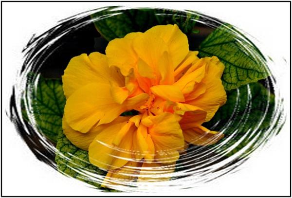 Flower by k2