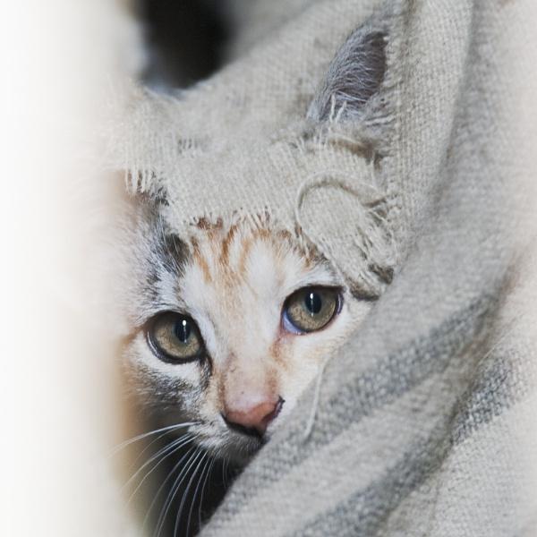 Kitten by peaceshooter