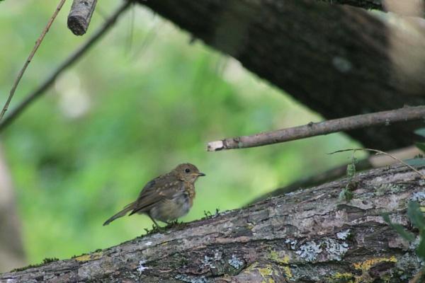Bird on log by feefeepootle