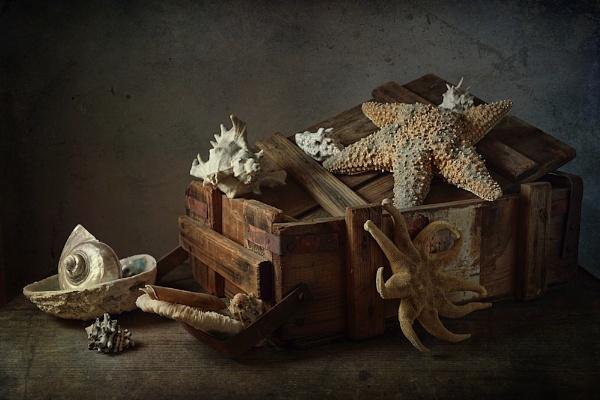 Shells by cattyal