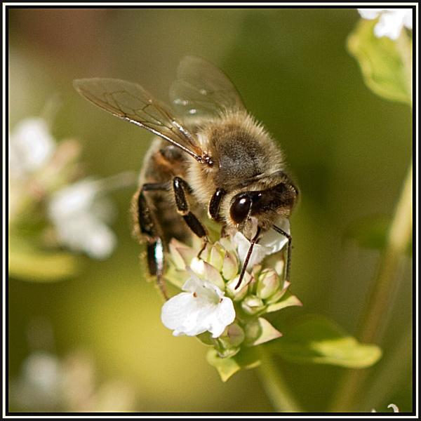 bumblebee by bumbleb3