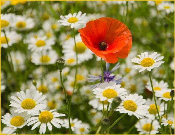 Flower Meadow. by myrab