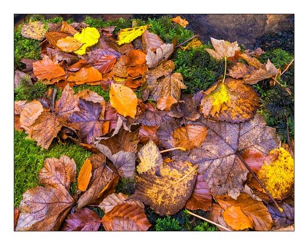 Forest colour by douglasR