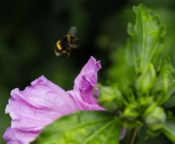 Buzz buzz buzzz by Growmore