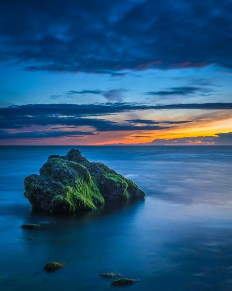 Sea weed by EdricCross
