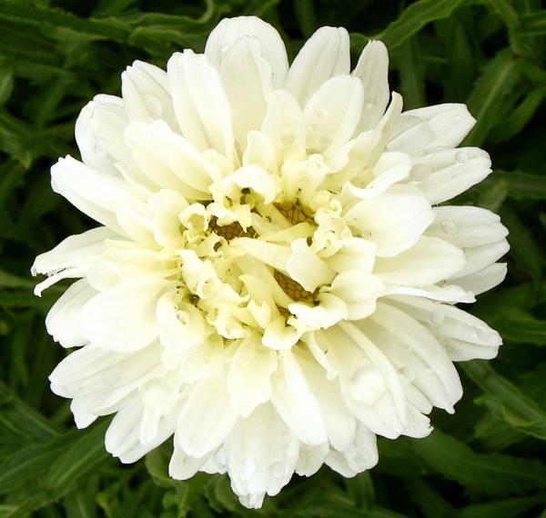 flower by ireland