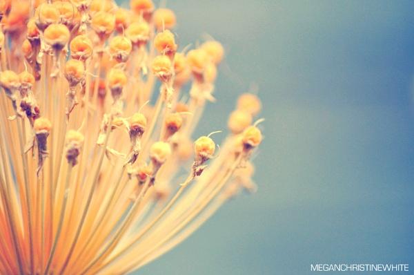 Summer by Meganwhitephotography