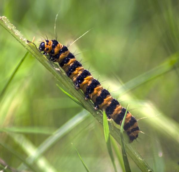 Caterpillar by SimplySteph