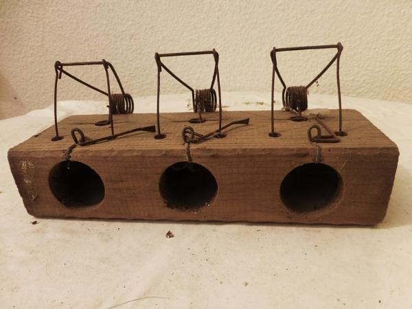 3 blind mice! by Chinga