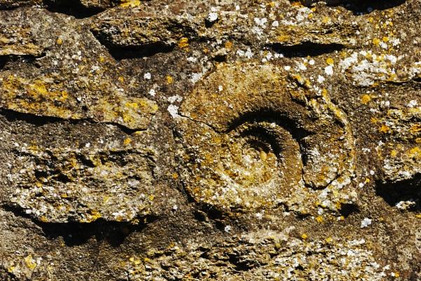 Fossil by notsuigeneris