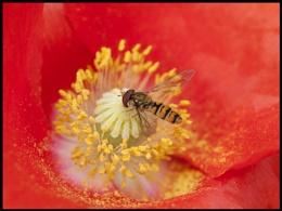High Pollen Count