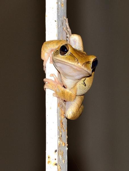 Friend(ly) Frog! by balan_20mar52