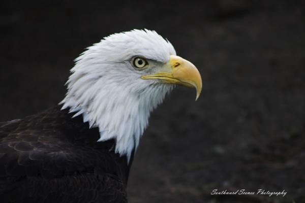American Icon by shutterbug8156