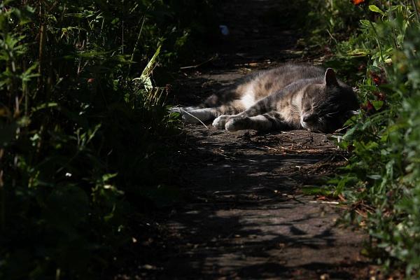 Sleepy cat by turniptowers