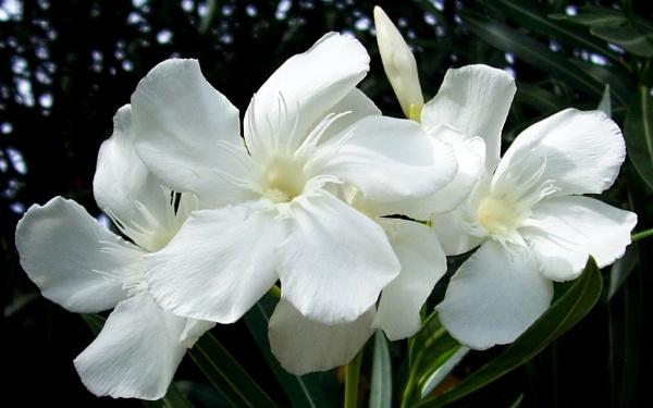White Hues by Potra