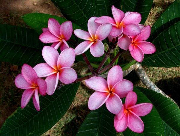 Rosé by Potra