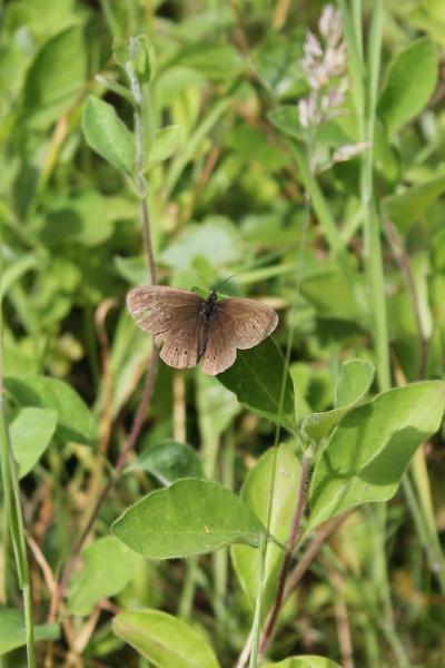 Moth by feefeepootle