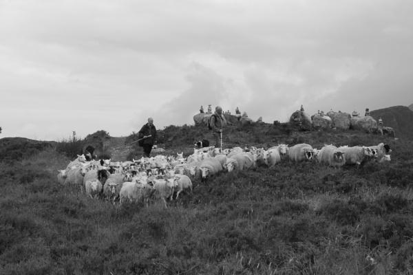Sheep on Skye by feefeepootle
