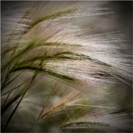 Grass & Sunlight