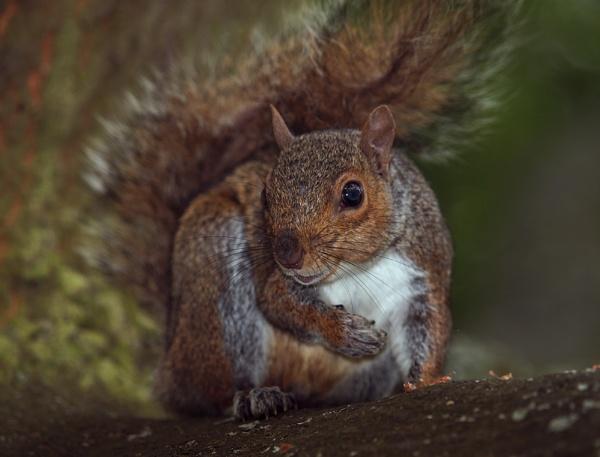 Sharp Squirrel by chensuriashi