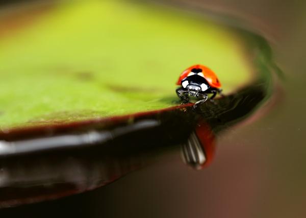 Pond Life by NeilM