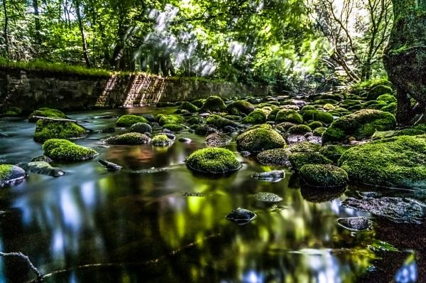 Nature\'s Greens by jeni