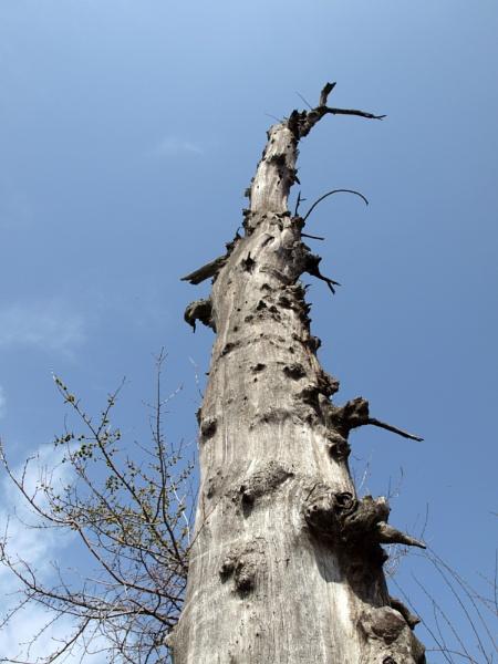 Dead tree at Rosen Monastery by DavidInBulgaria