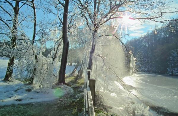 Ice Tree by WildChild88