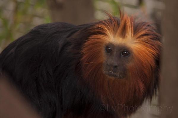 animal by lvphotogallery