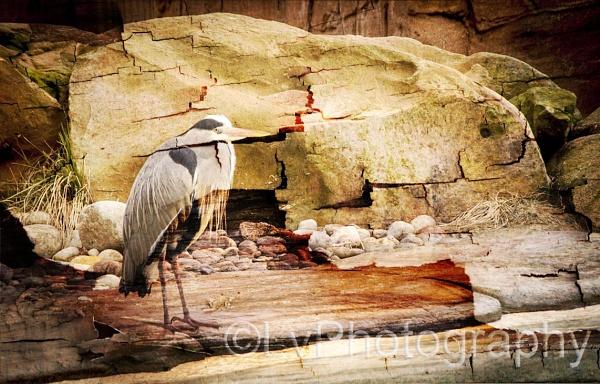 bird by lvphotogallery