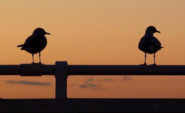 Enjoying the Sunset by pdunstan_Greymoon