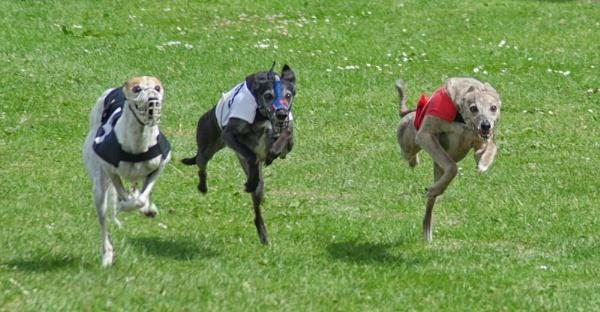 Three Legged Race by widtink