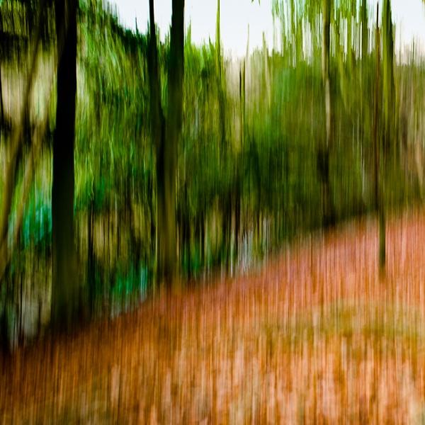 Woodland Trees by jacks_19